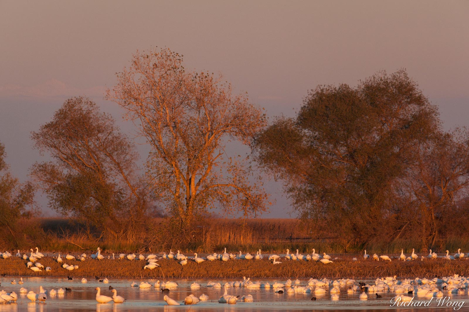 Winter Birds, Merced National Wildlife Refuge, California, photo, photo