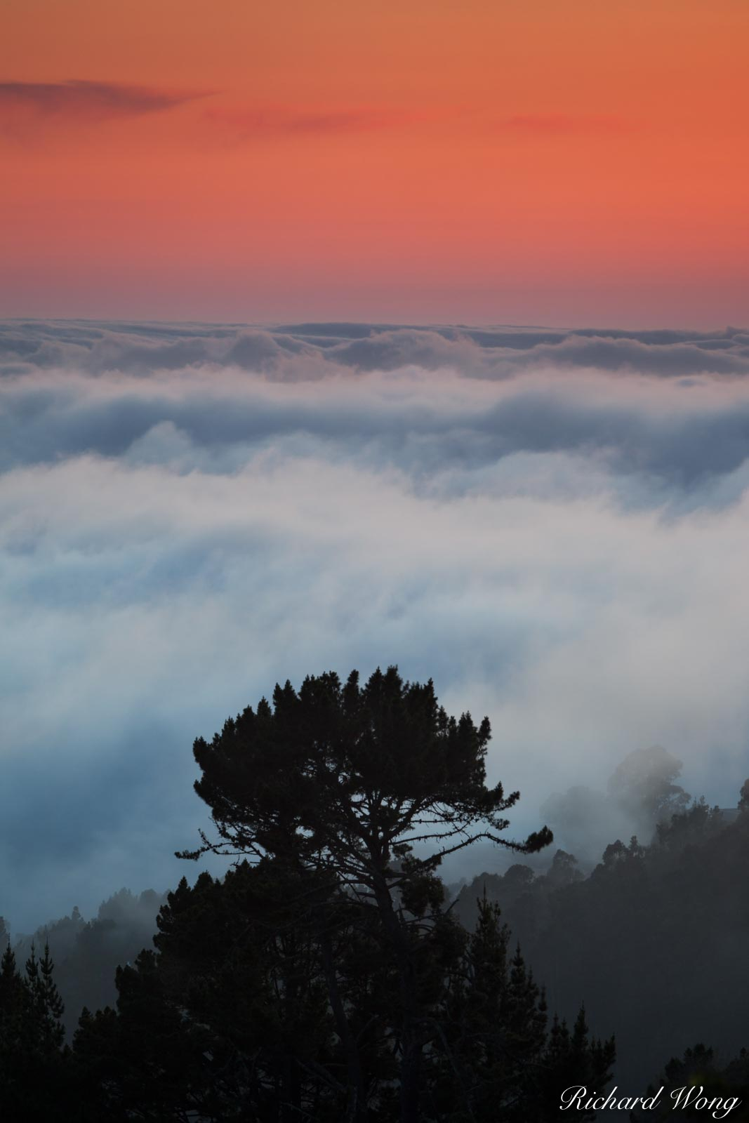 Tree in a Sea of Fog at Sunset, Berkeley, California, photo, photo