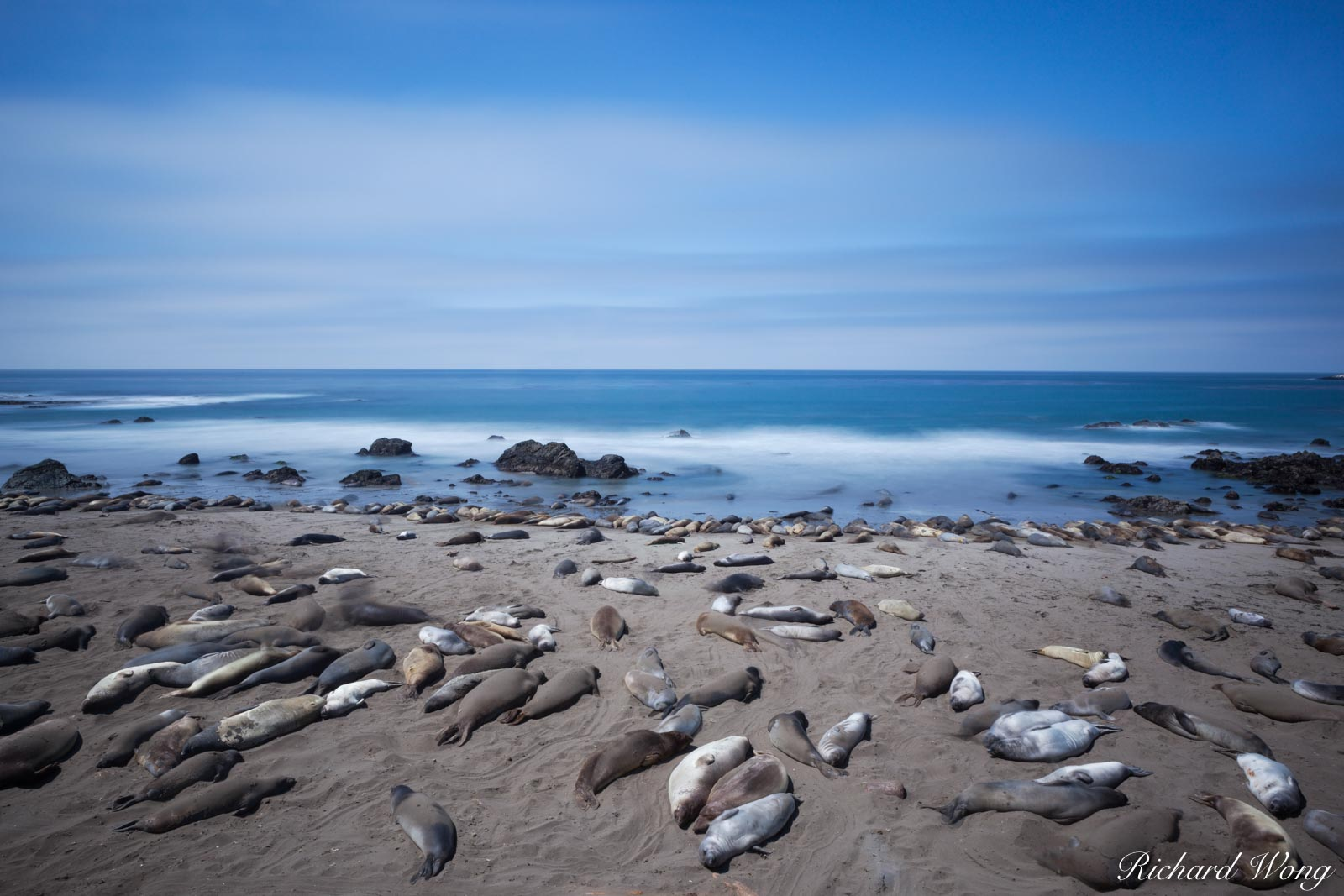 Elephant Seal Colony, Point Piedras Blancas, California, photo, photo