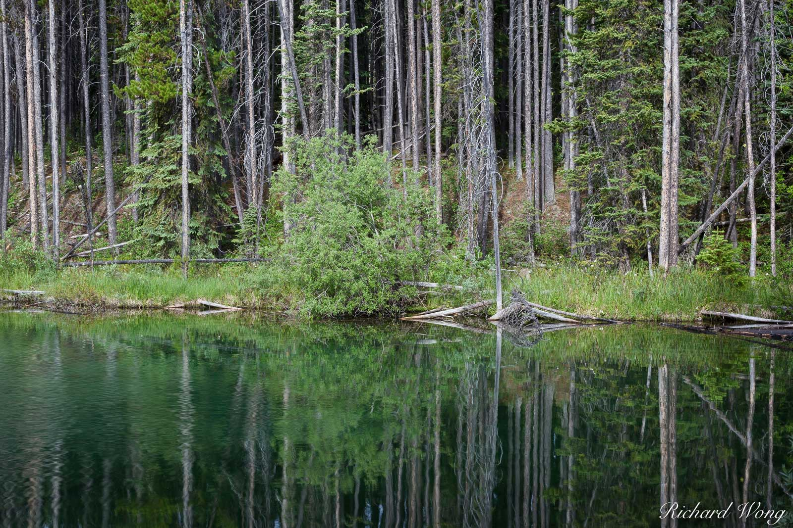 Forest Reflection at Herbert Lake, Banff National Park, Alberta, Canada, Photo, photo