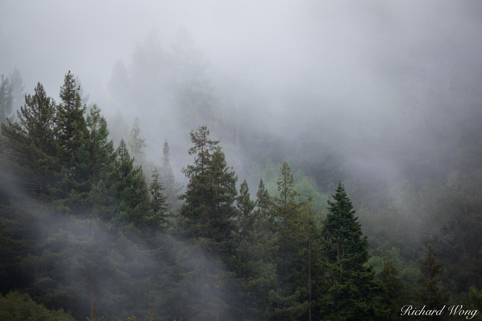 Foggy Forest in Berkeley Hills, Berkeley, California, photo, photo