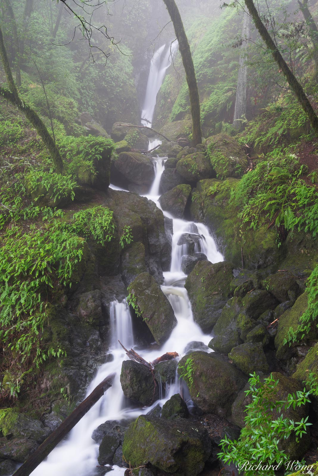 Cataract Falls in Fog / Mount Tamalpais Watershed, Marin County, California, photo, photo