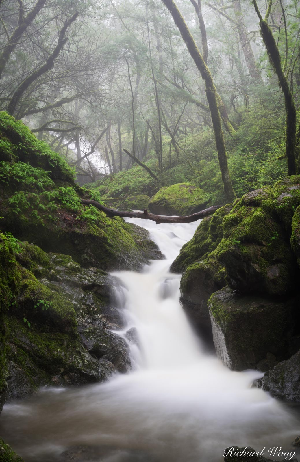 Cataract Creek Under Thick Forest in Mount Tamalpais Watershed, Marin County, California, photo, photo
