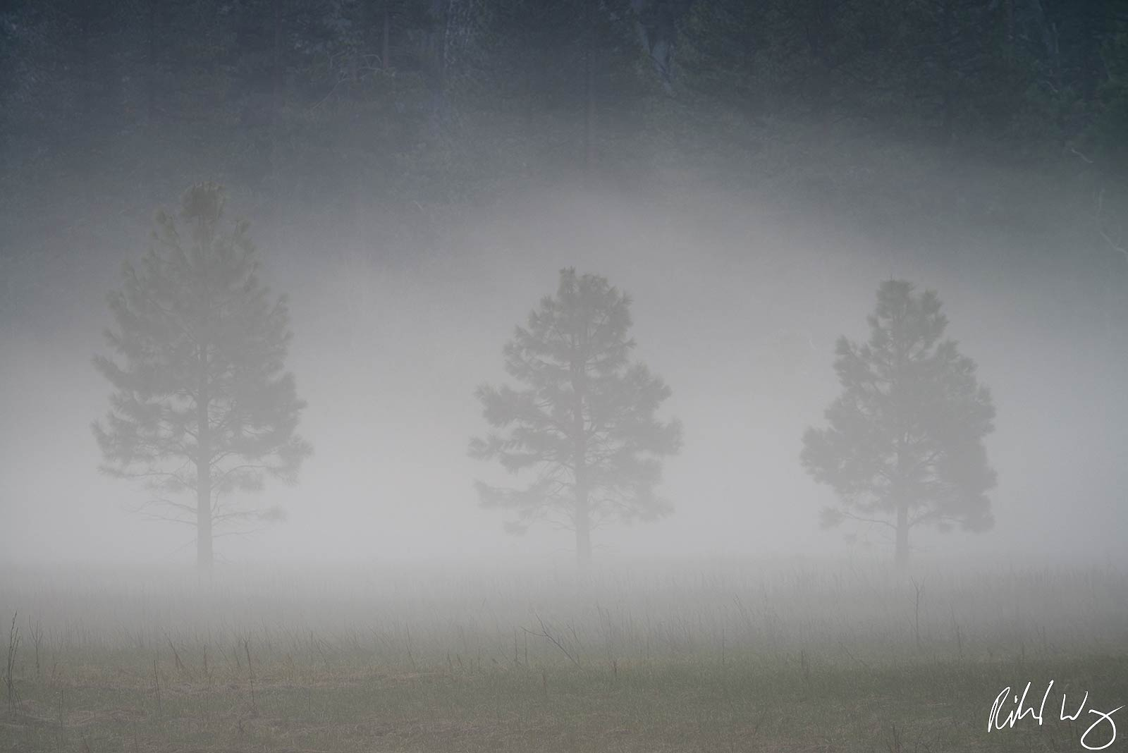 fog, three threes, yosemite valley, yosemite national park, california, photo, photo