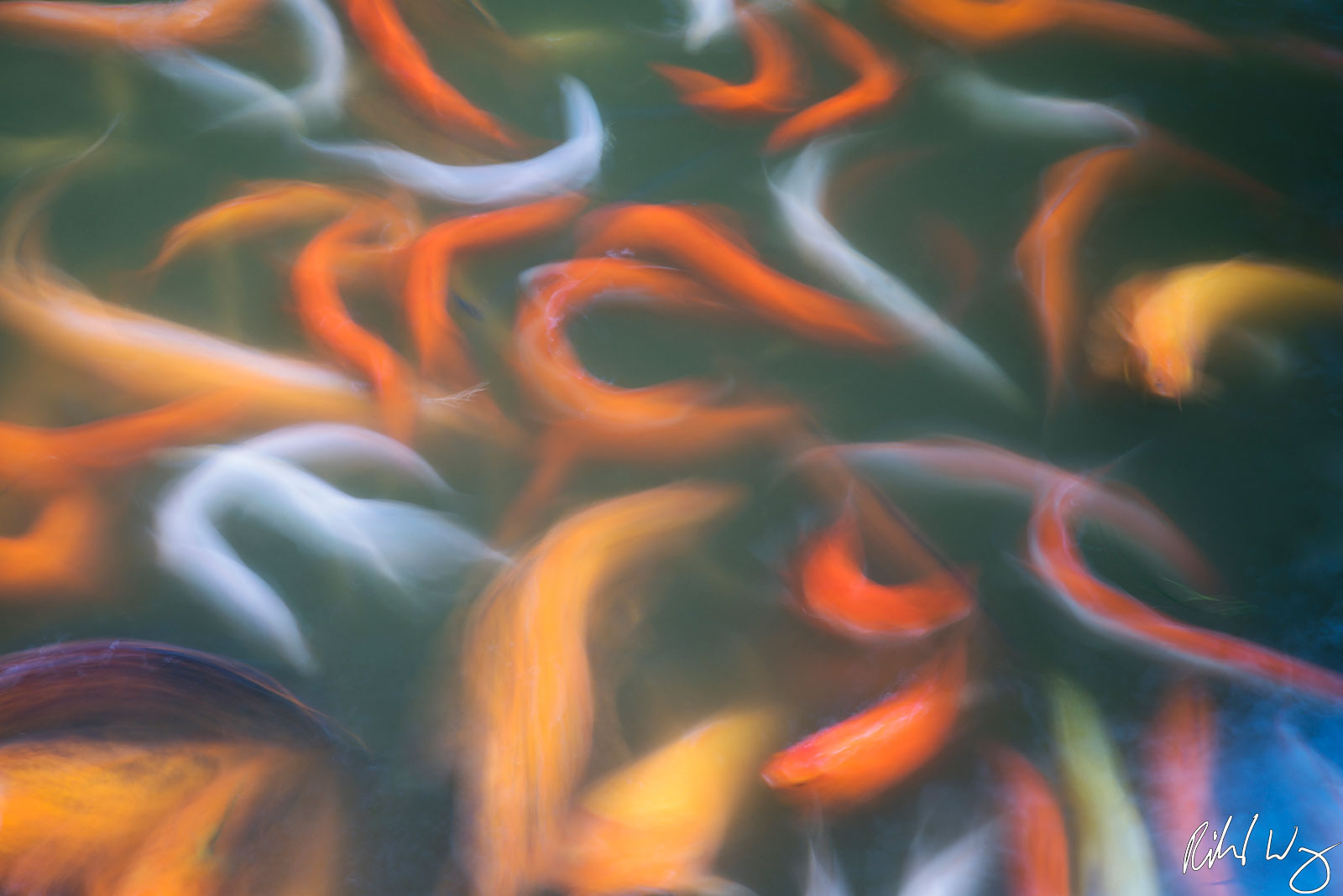 Byodo-In Koi, oahu, hawaii, fish, abstract, photo, photo