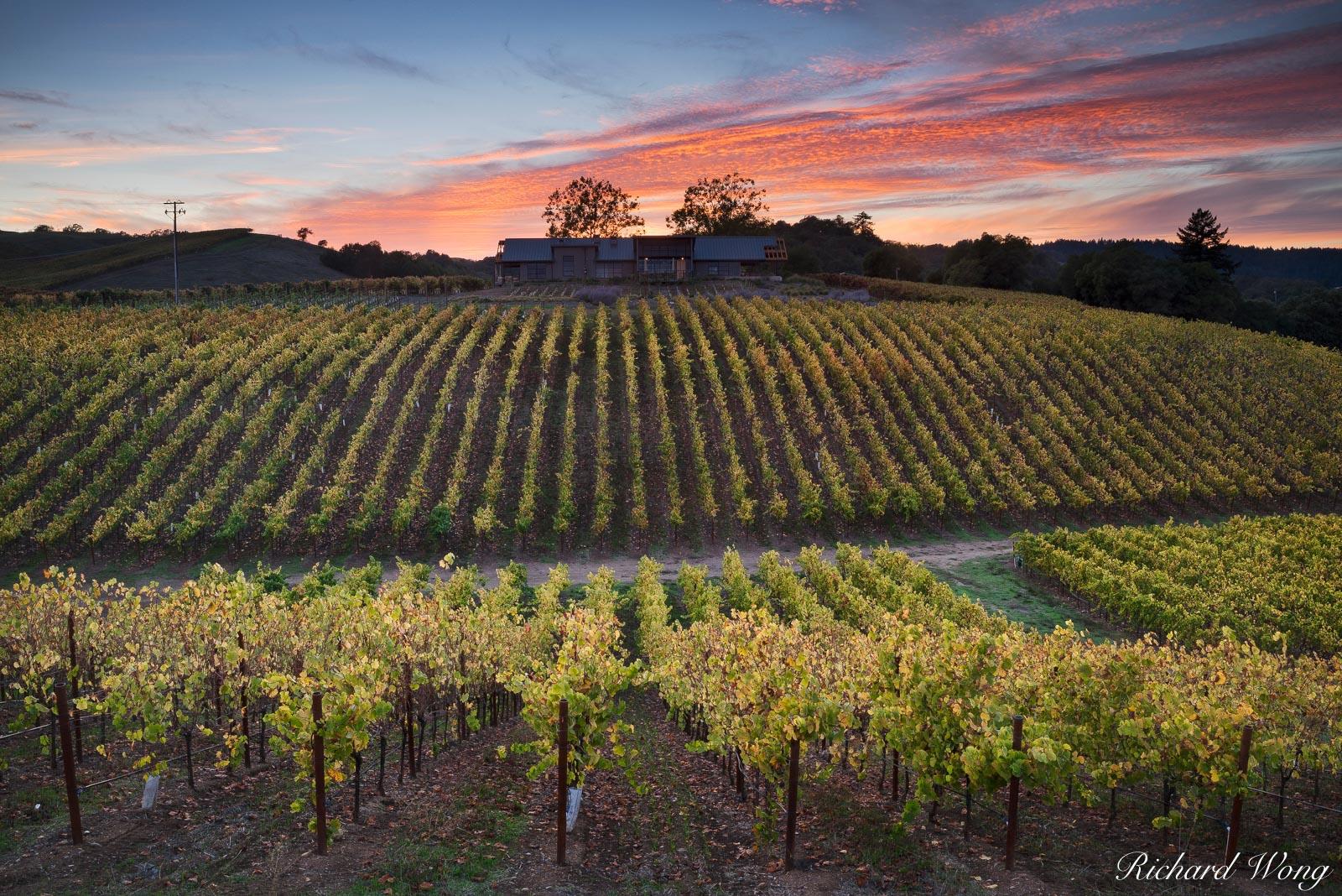 MacRostie Winery & Vineyards, Russian River Valley AVA, California, photo, photo