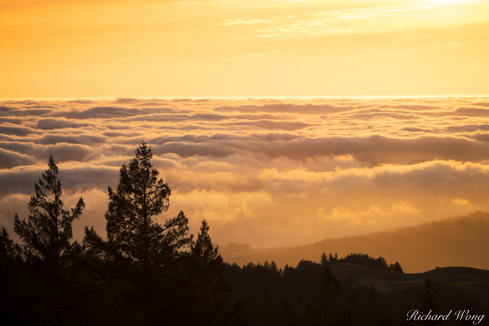 Foggy Sunset in Spring, Mount Tamalpais State Park, California, photo, photo