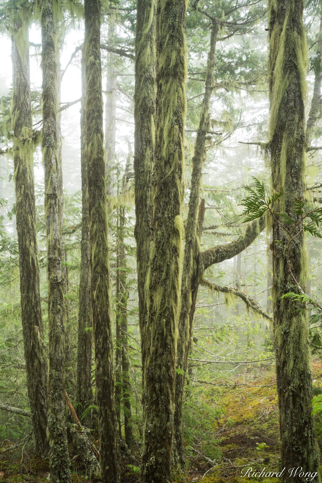Temperate Rainforest, Morse Creek, Olympic National Park, Washington, photo