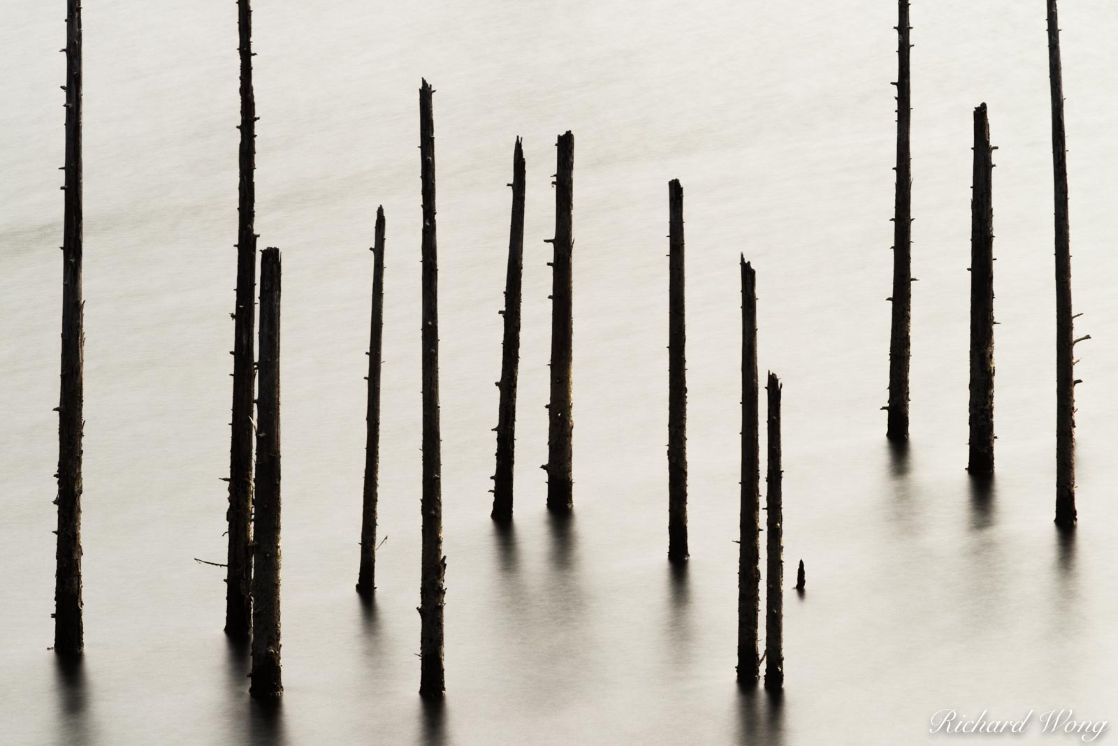 Dead Trees at Kent Lake, Marin County, California, photo, photo