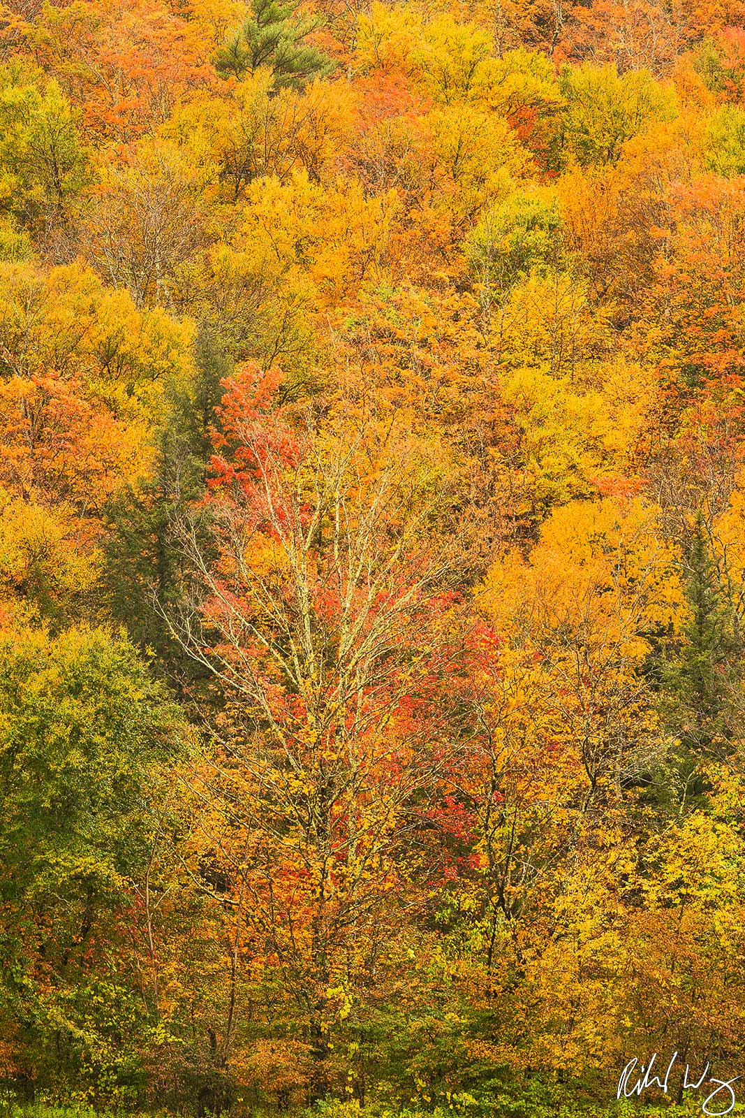 Fall Foliage on Hillside, Hancock, Vermont, photo