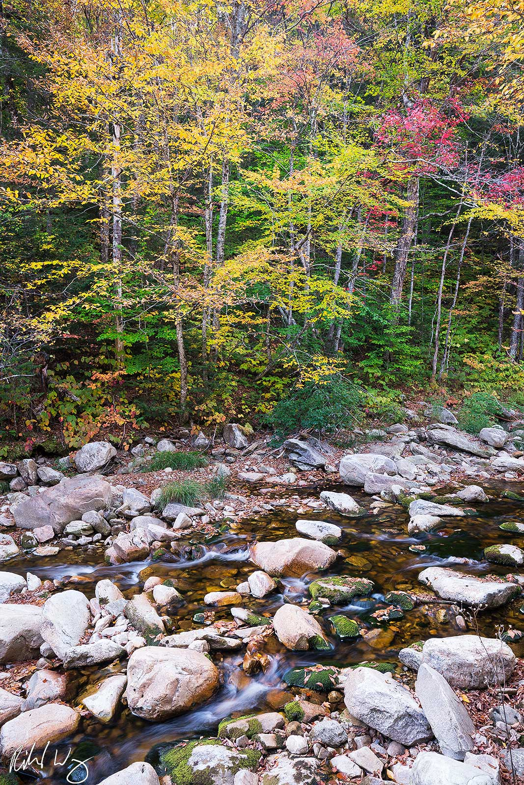 Fall Color Along Roaring Branch River, Green Mountain National Forest, Vermont, Photo, photo