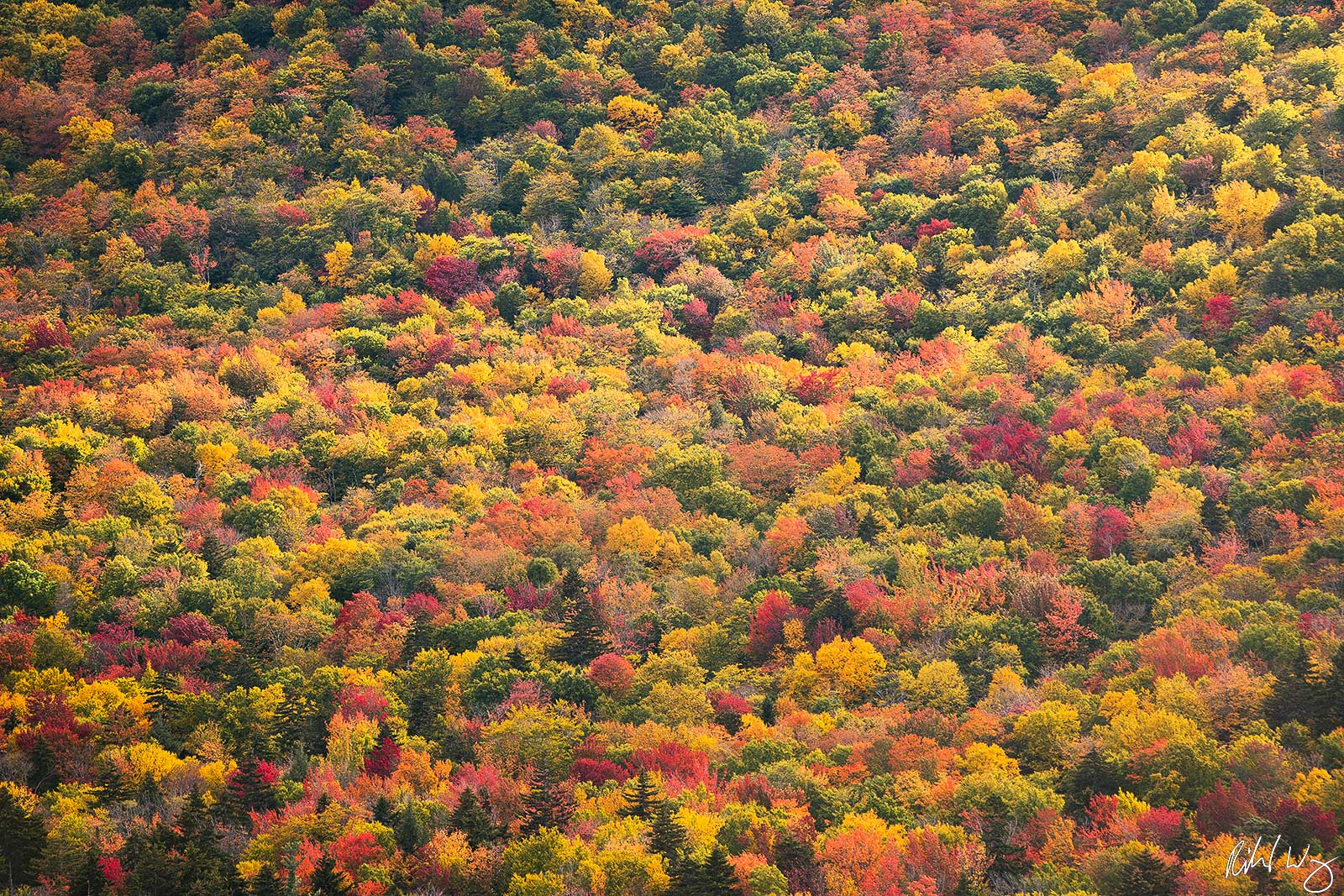 Full Spectrum of Fall Colors Along Kancagamus Highway, White Mountain National Forest, New Hampshire, Photo, photo