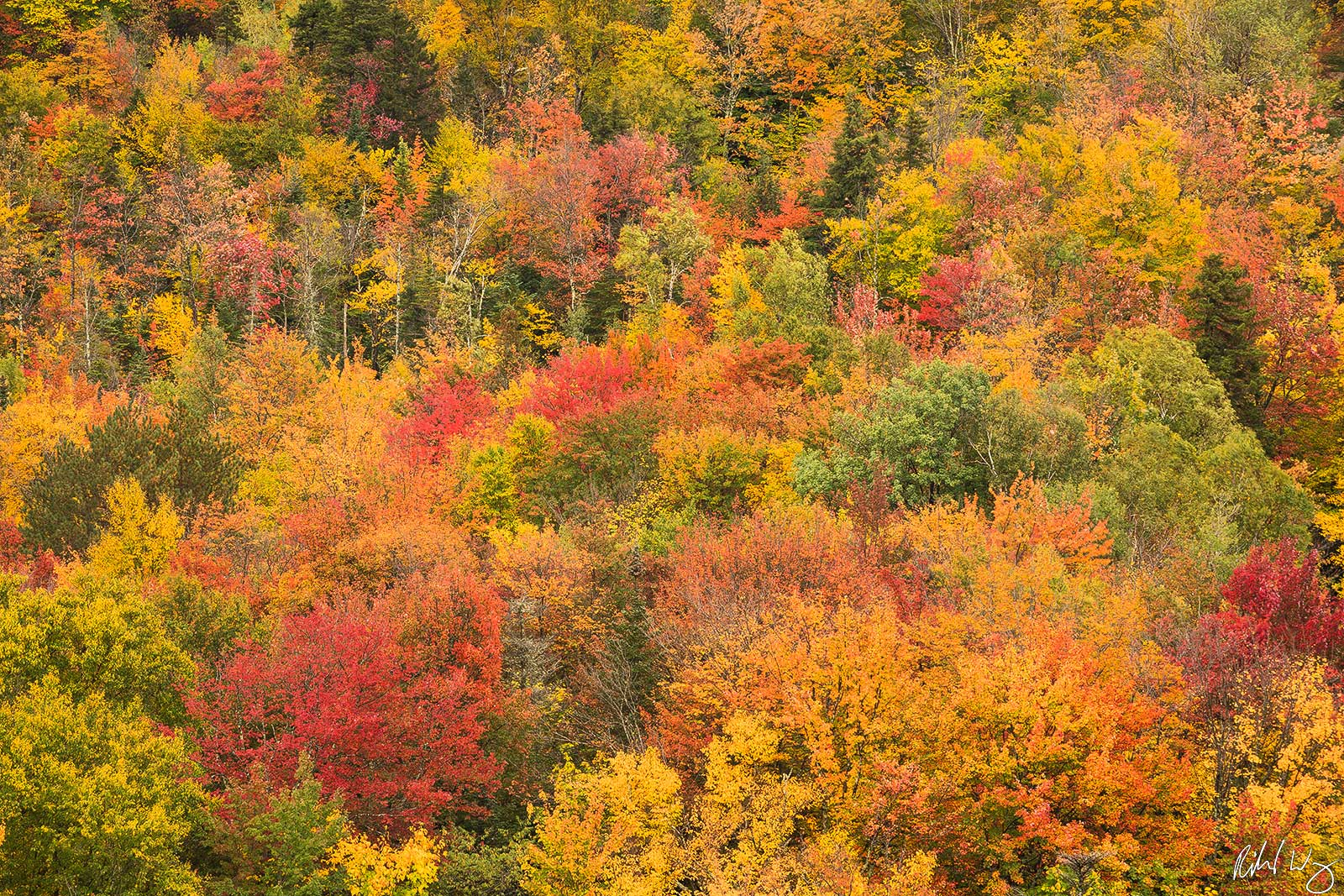 Fall Color Forest Tapestry, Franconia Notch State Park, New Hampshire, Photo, photo