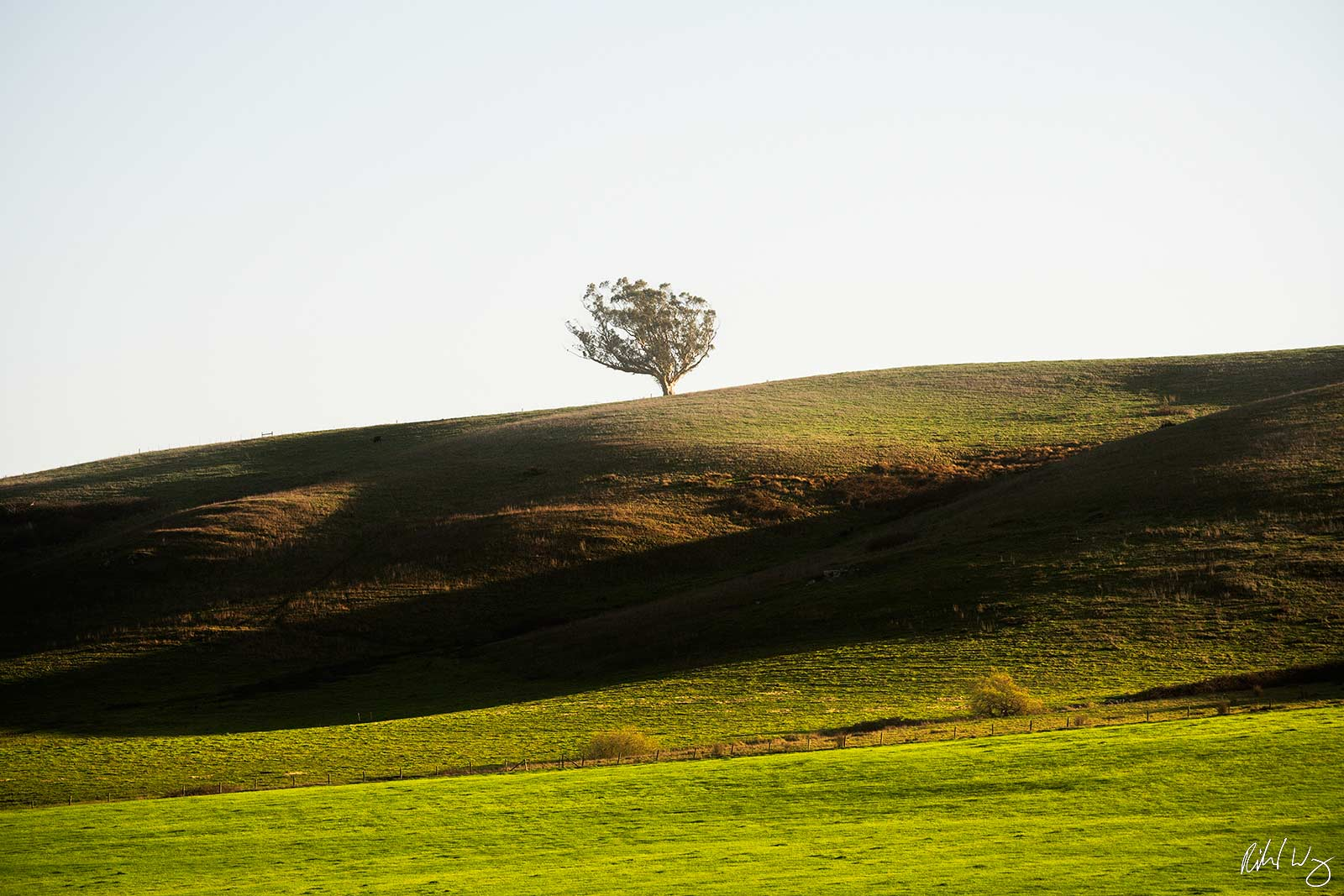 Tree on Hill With Afternoon Sidelighting, Valley Ford, California, Photo, photo