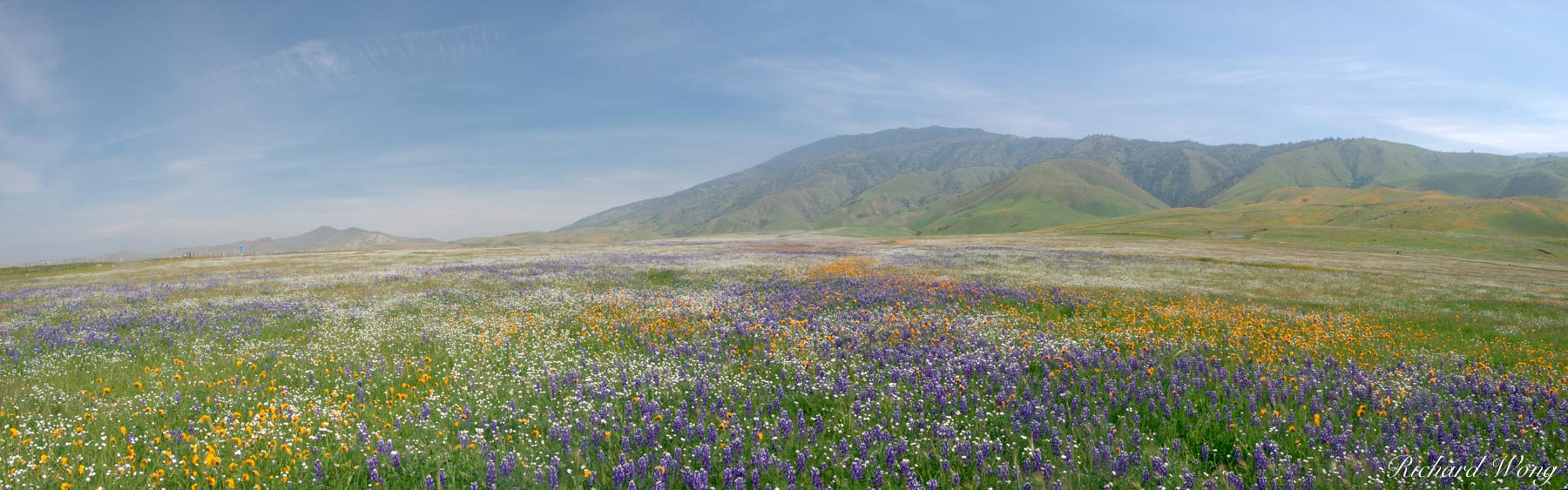 Spring Wildflowers Panoramic Landscape, Kern County, California, photo, photo