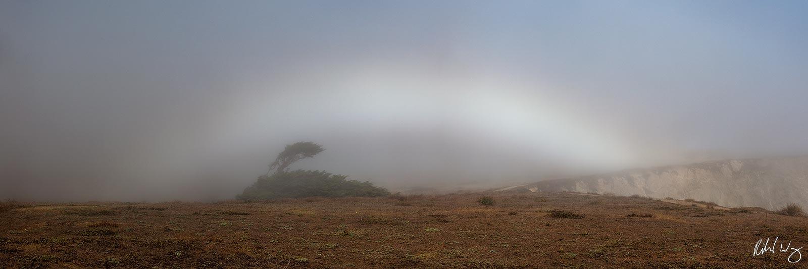 Fogbow Panoramic at Bodega Head, Sonoma Coast, California