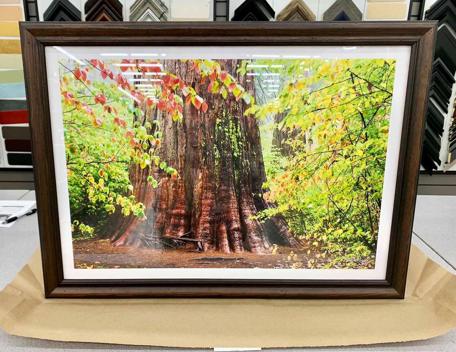 Framed Fine Art Photography Print