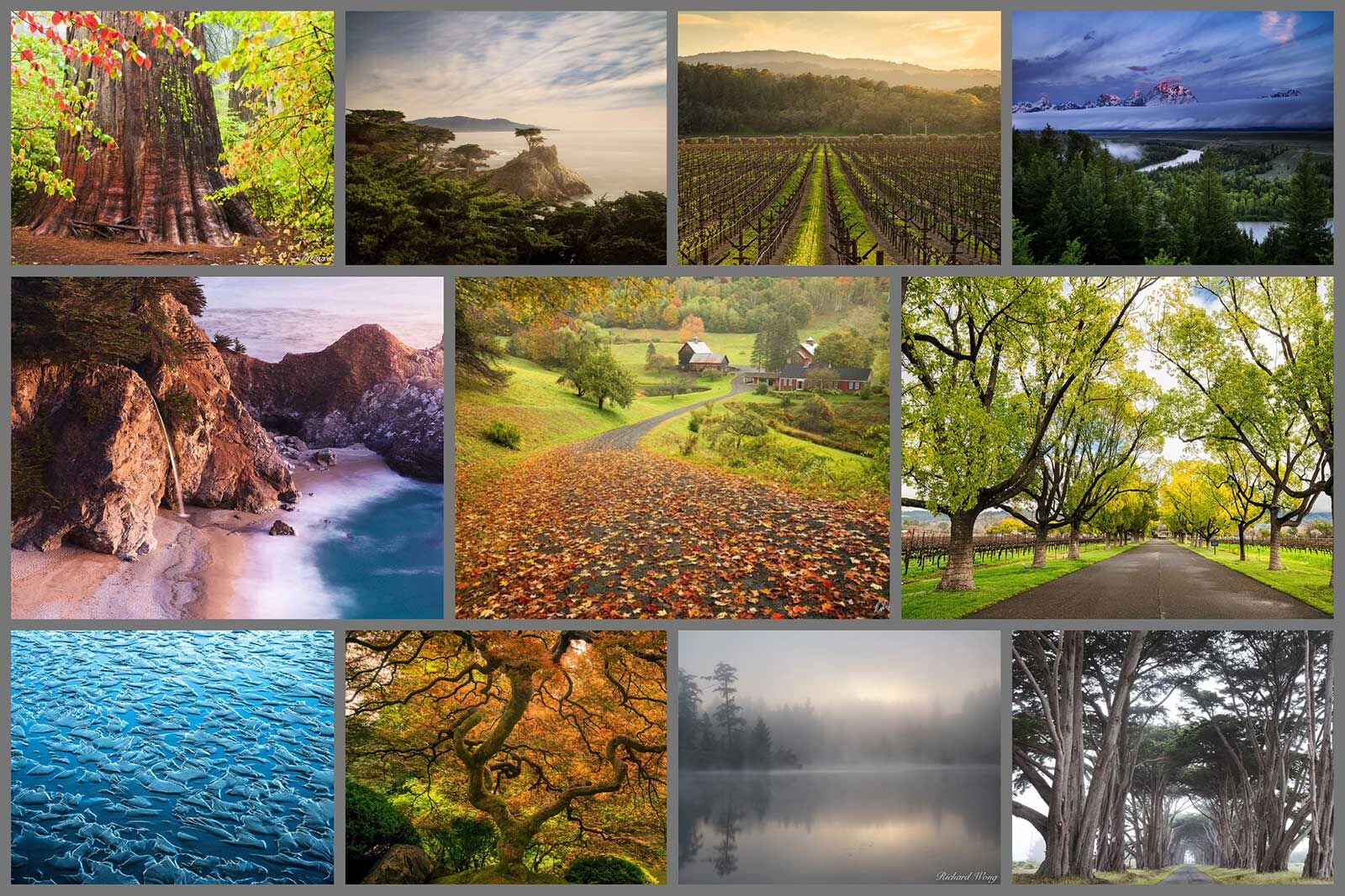 Nature & Landscape Photography Galleries